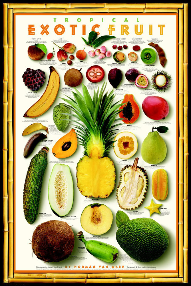 Posters – Exotic Tropical Fruit Poster