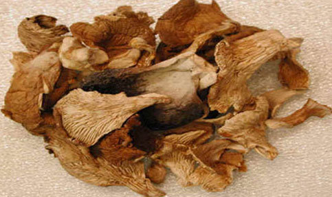 Dried Oyster Mushrooms.